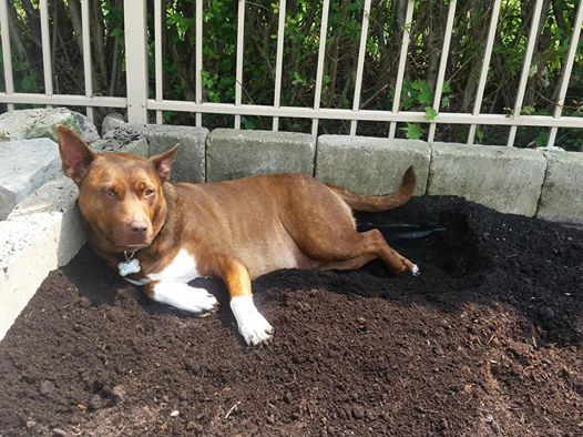 Dog Training: Digging Holes