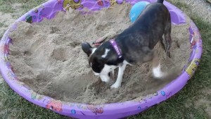 training dogs not to dig holes